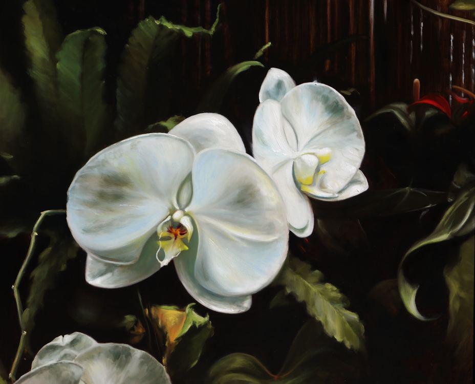 """""""Asheville Orchids"""""""
