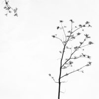 Untitled, Branch, Tree and Sky